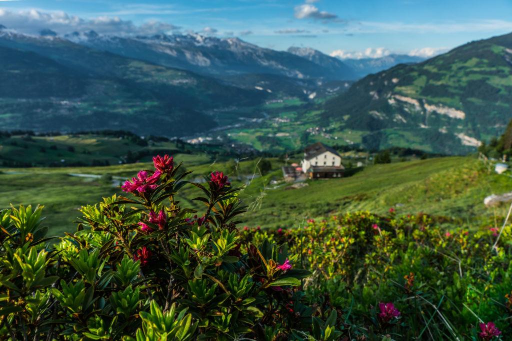 Bergsommer Surselva, Aussicht über das Tal bei schönem Wetter, Blumen, Berge und Häuser